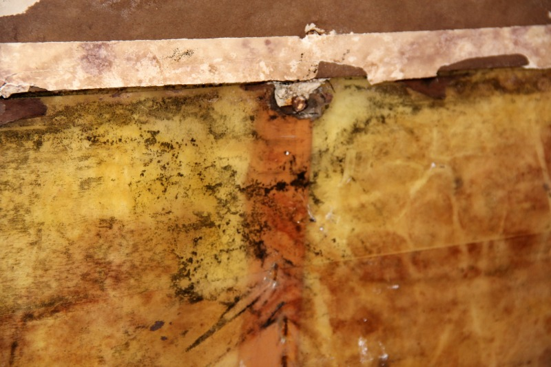 Shower mold and mildew